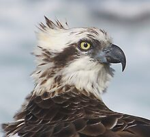 A Universal Language - The Osprey's Inspirational Gift by FIONA M. HENSHAW