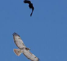 Air Wars.... Hawk and Crow  by lloydsjourney