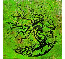 Old and Ancient Tree - Leaf Green by Heather Holland Photographic Print