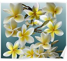 Plumeria on Blue Poster