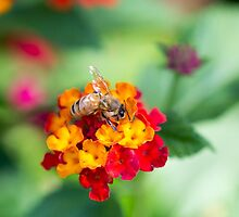 Bee by Sarah Guiton