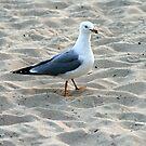 Walk On The Beach by Virginia N. Fred