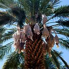 close view of date palm by Kathy Gonzales