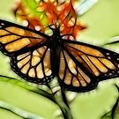 Stealth Monarch  by Donna Adamski