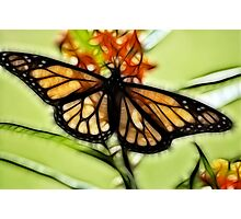 Stealth Monarch  Photographic Print