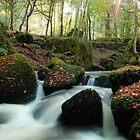 Autumn Sparkle by Kernow-Digital