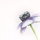 Anemone by funkymarmalade