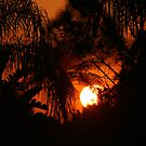 Sunset Through The Trees 3/11/09 by Virginia N. Fred