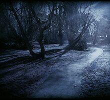 Moonlight by Anne Staub