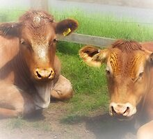 Cattle Companionship by missmoneypenny