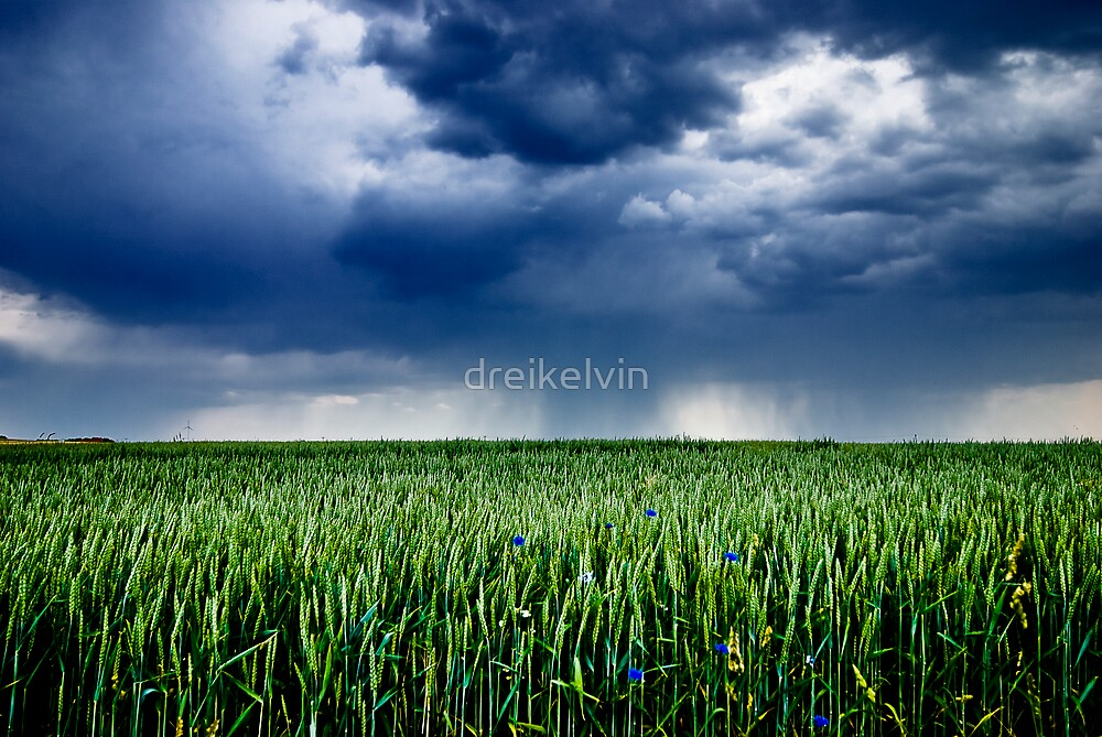 Das Feld by dreikelvin