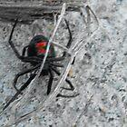 Black widow by Jwood