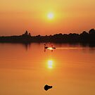 Swans at Sunset  by Martina Fagan