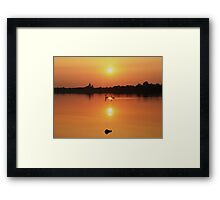 Swans at Sunset  Framed Print