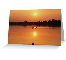 Swans at Sunset  Greeting Card