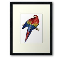 Illustration of A Scarlet Macaw Isolated On White Framed Print