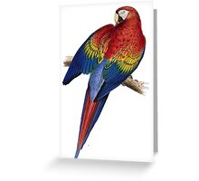 Illustration of A Scarlet Macaw Isolated On White Greeting Card