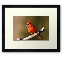 Colorful Cardinal. Framed Print