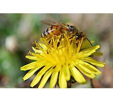 My Bee Photographic Print