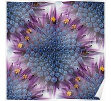 Stunning African Daisy Tropical Flower Macro Seamless Image Poster