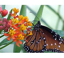 Butterfly ~ Fit for a Queen Photographic Print