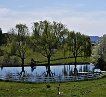 Weeping Willow Pond by NancyC