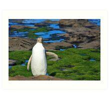 Yellow-eyed Penguin Stretching Art Print