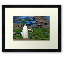Yellow-eyed Penguin Stretching Framed Print