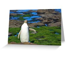 Yellow-eyed Penguin Stretching Greeting Card