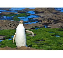 Yellow-eyed Penguin Stretching Photographic Print