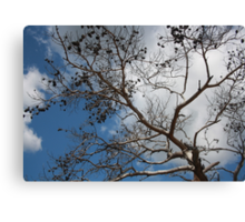 Skeleton of A Pine Tree Against Sky and Clouds Canvas Print