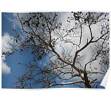 Skeleton of A Pine Tree Against Sky and Clouds Poster