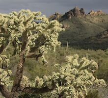 Arizona by Robert Khan by Robert Khan