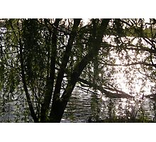 Light Through Willows Photographic Print