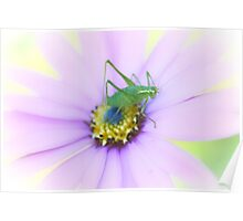 Flower Hopper Poster