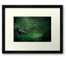 Peacock Wood Framed Print