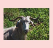 Portrait of A Horned Goat Grazing Kids Clothes
