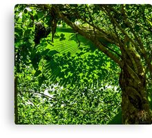 Cool Shade Canvas Print