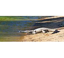 Freshwater Crocodiles  Photographic Print