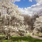 Magnolia Walk by Marilyn Cornwell