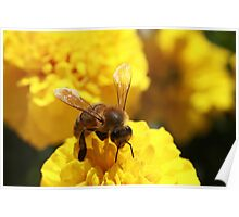Angaston Bee #2 Poster