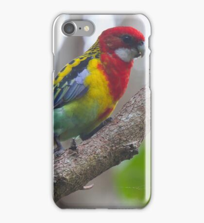 The Shy Rosella iPhone Case/Skin