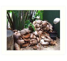 Kuranda Coconuts Art Print