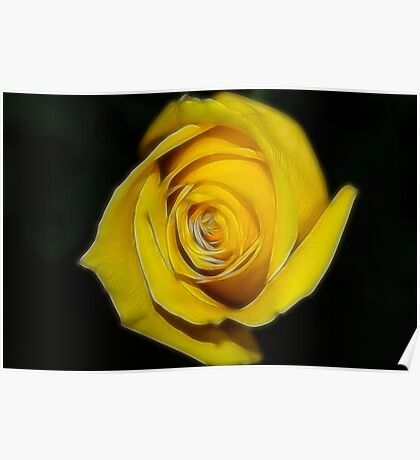 Spring Yellow Rose Poster