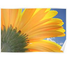 A Daisy Welcoming The Sky Poster