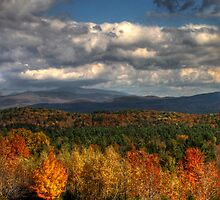 Sunlit Tree in Autumn Splendor  by Wayne King