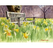 Bench in daffodils  Photographic Print