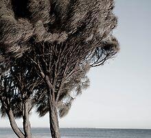 White Cliffs by Rosina  Lamberti