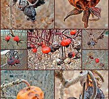 Beach Rose Hips - Woods Hole - Cape Cod by MotherNature