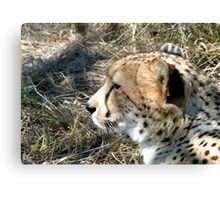 Cheetah portrait, up close and personal Canvas Print